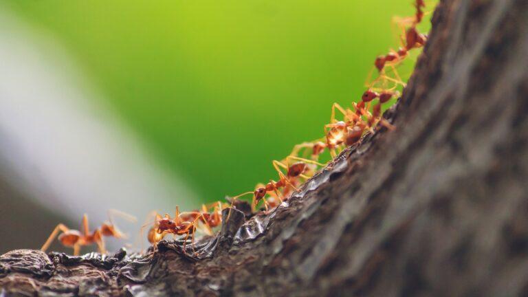 Myror inspirerar självkörande bilar